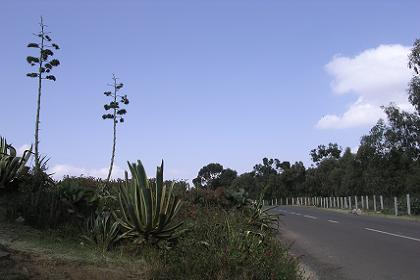 The road to Massawa, two kilometers from Asmara.